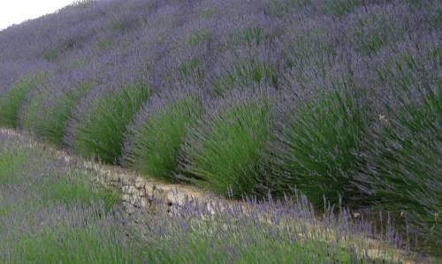 Provence (19)