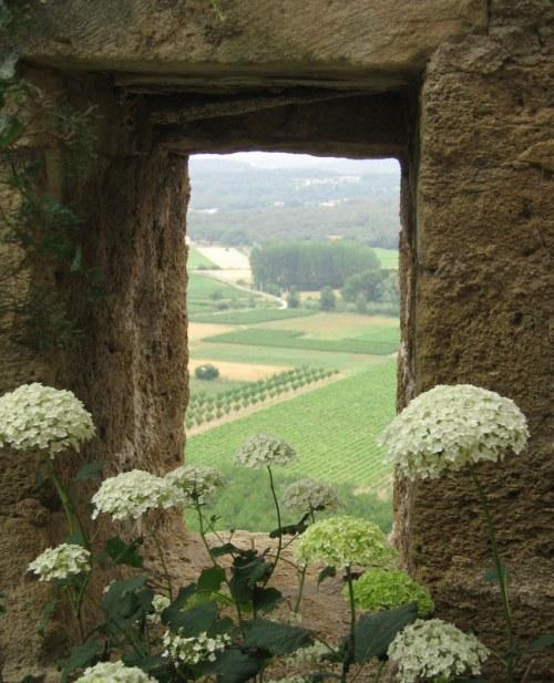 Provence (204)