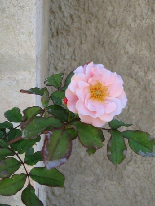 Provence (283)