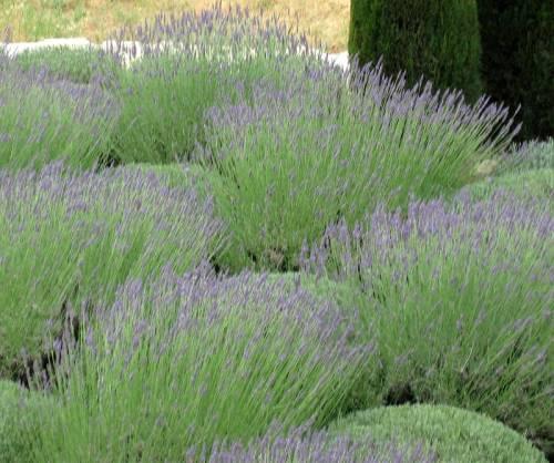 Provence (118)