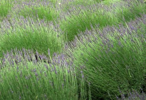 Provence (122)
