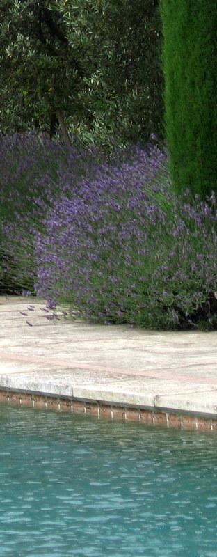Provence (241)