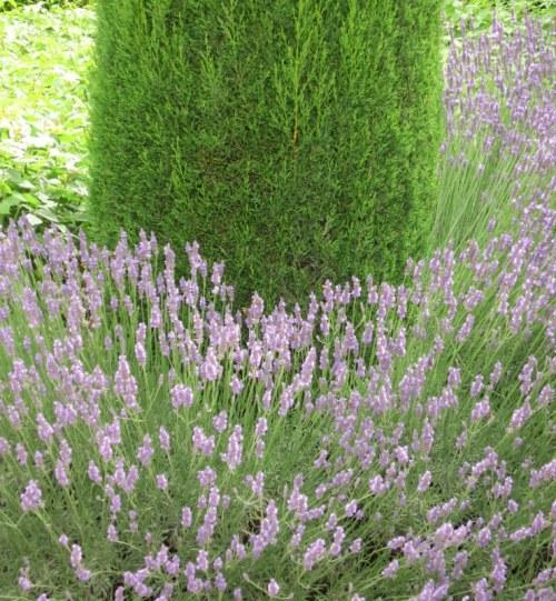 Provence (242)