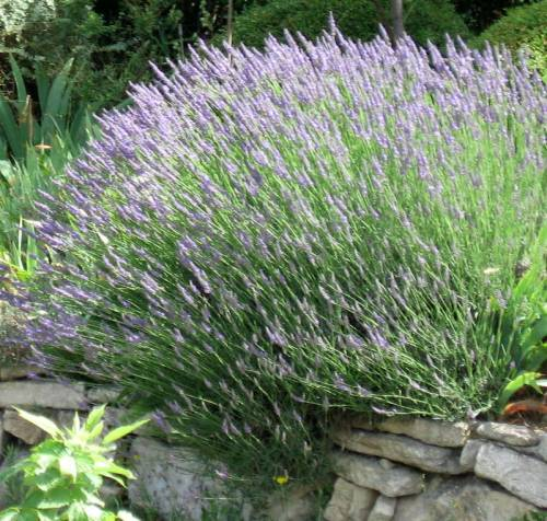 Provence (97)